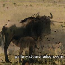 Stuart Neilson - 3c2 Waterhole (processed video)